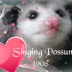 Singingpossum
